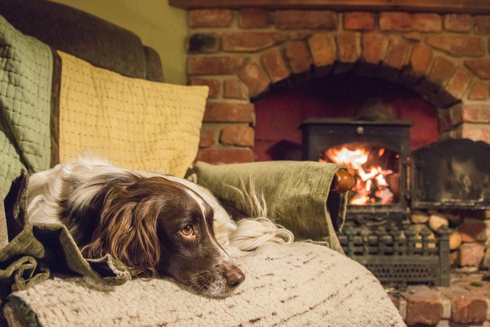 Уютный дом, камин, собачка